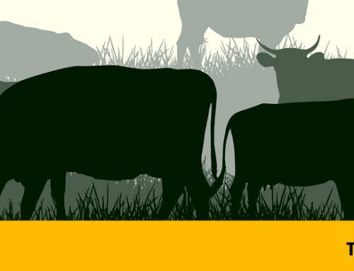 Tetanus – Preventable Diseases of Cattle