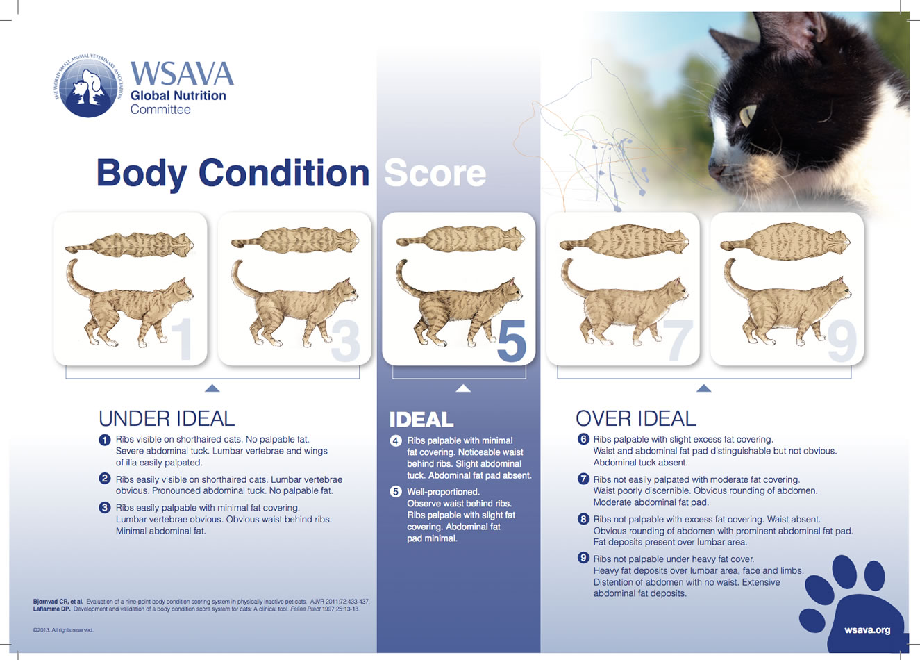 Body Condition Chart for cats