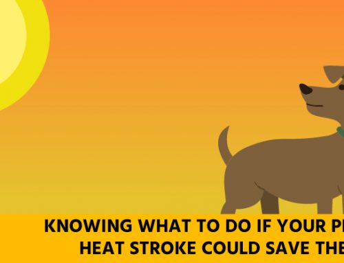 7 signs of heat stroke in your pet and how you can prevent it this summer